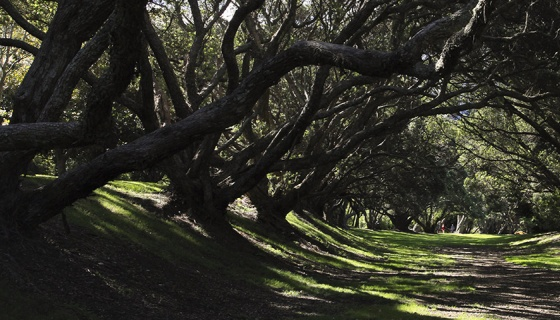 Glade of trees in Auckland